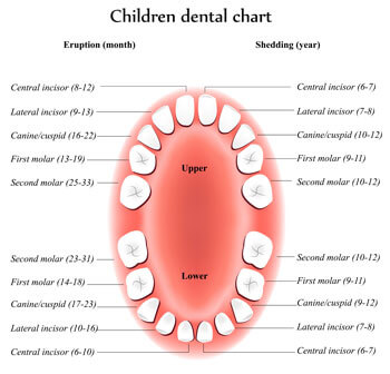 Tooth Eruption Chart - Pediatric Dentist and Orthodontist in Dallas, TX